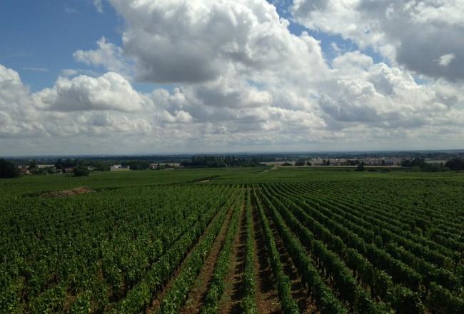 O início do percurso por alguns dos mais famosos vinhedos da França