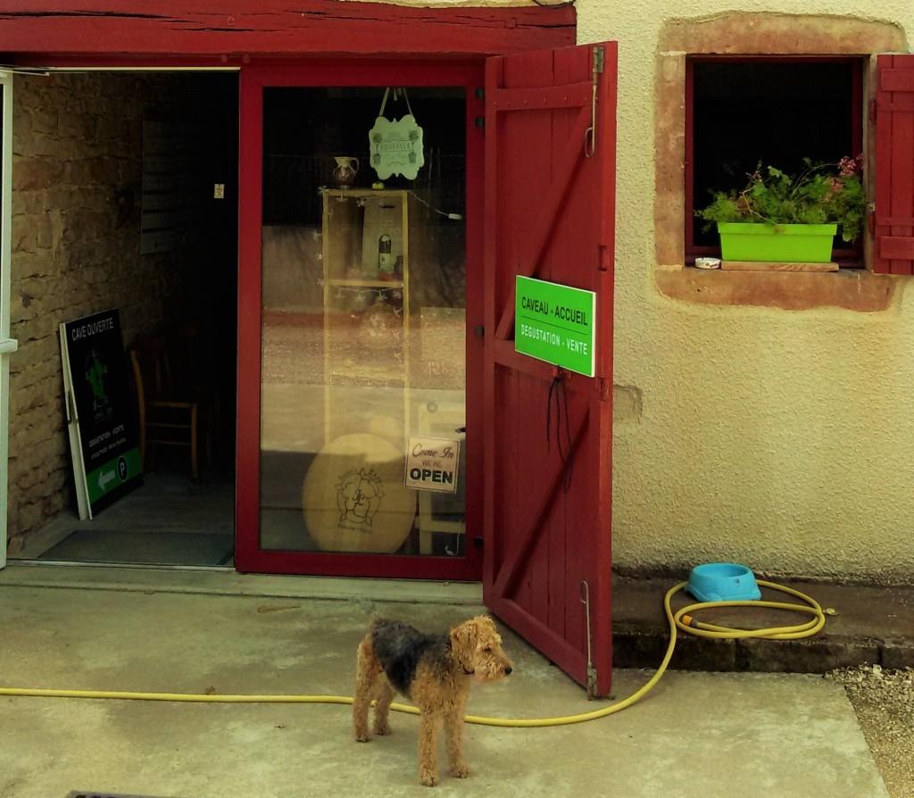 O vira-lata toma conta da pequena sede da vinícola