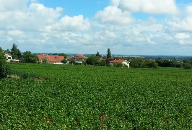 Em Brochon, a primeira degustação não turística de vinhos 'de fundo de quintal'