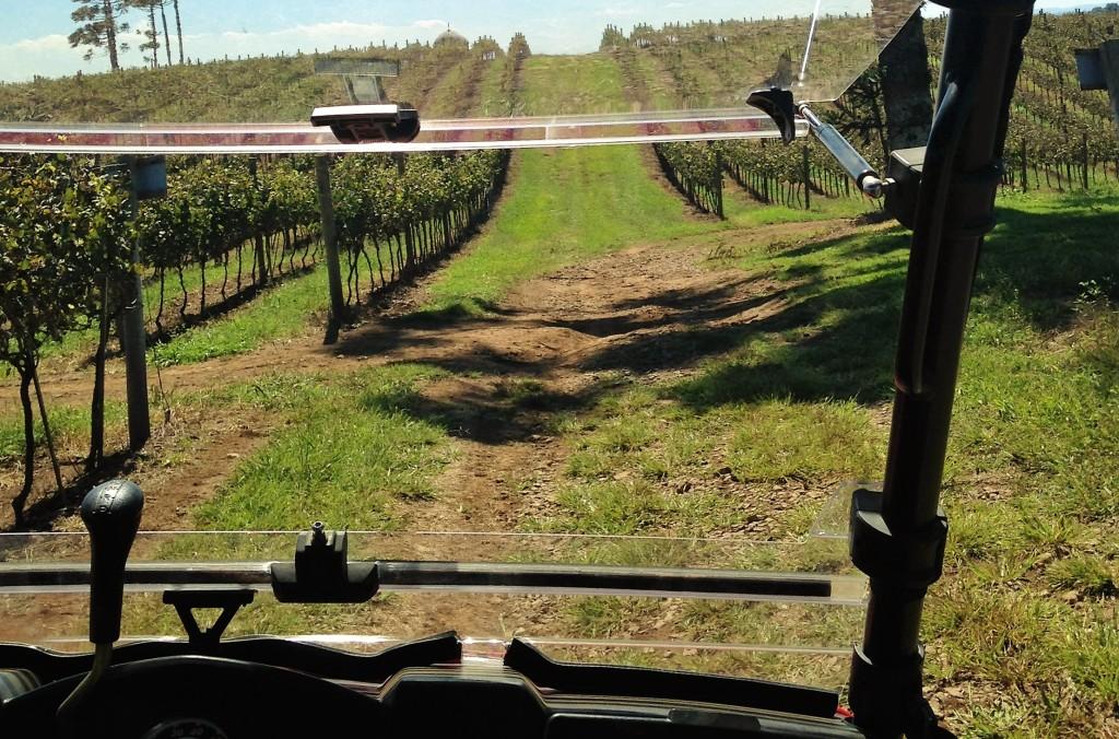 Plantação de uvas vista de dentro do 4x4 em que é feito um tour guiado