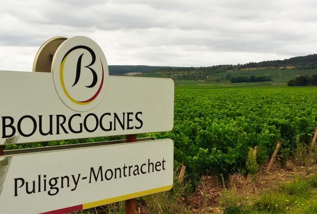 A estrada é repleta de vinhedos da uva chardonnay, a 'rainha da Borgonha'