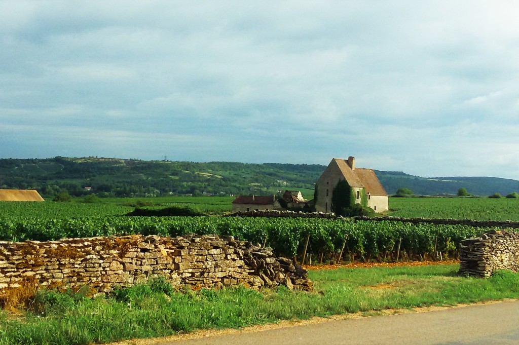 Trecho da estrada entre Chassagne-Montrachet e Santenay e as casas de viticultores no meio dos vinhedos