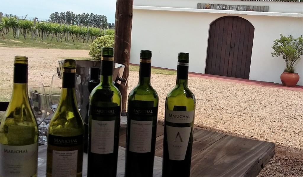 Vinhos degustados na Marichal, uma das vinícolas familiares que fazem parte da associação 'Los Caminos del Vino'