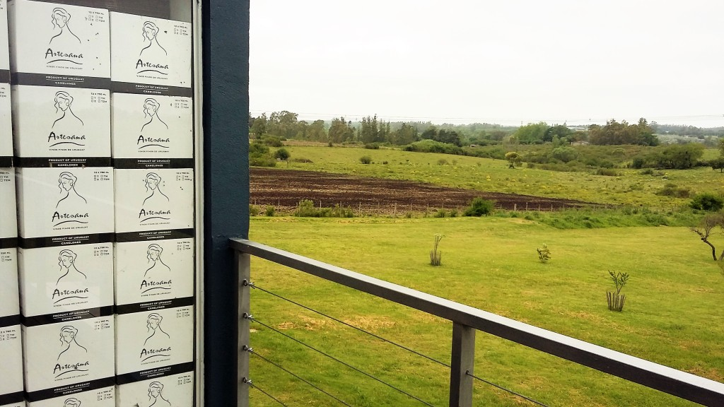 Da varanda da vinícola, vê-se parte dos vinhedos e do extenso terreno da propriedade