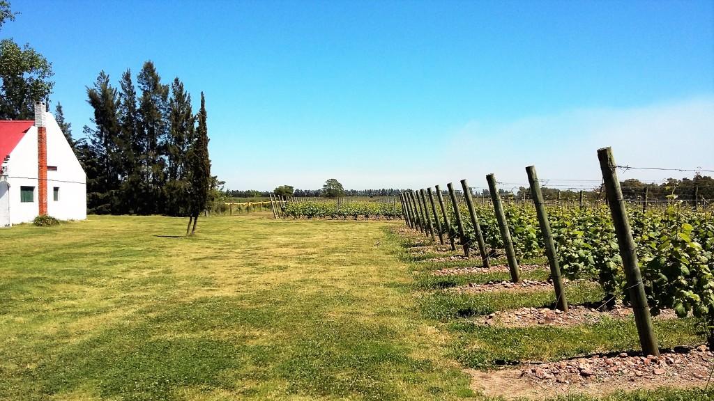 Panorama de vinhedos da Bouza: apesar da fama, vinícola produz apenas 120 mil garrafas por ano