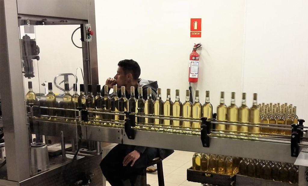 Fila de garrafas indo ao encontro dos rótulos