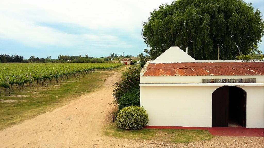 Vinhedos e a pequena casa branca onde ficam guardadas garrafas de vinhos de safras especiais da Marichal