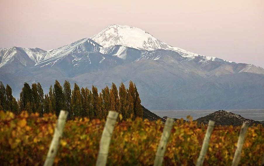 Parte dos vinhedos da vinícola no Valle de Uco, com a Cordilheira dos Andes ao fundo (foto: divulgação)
