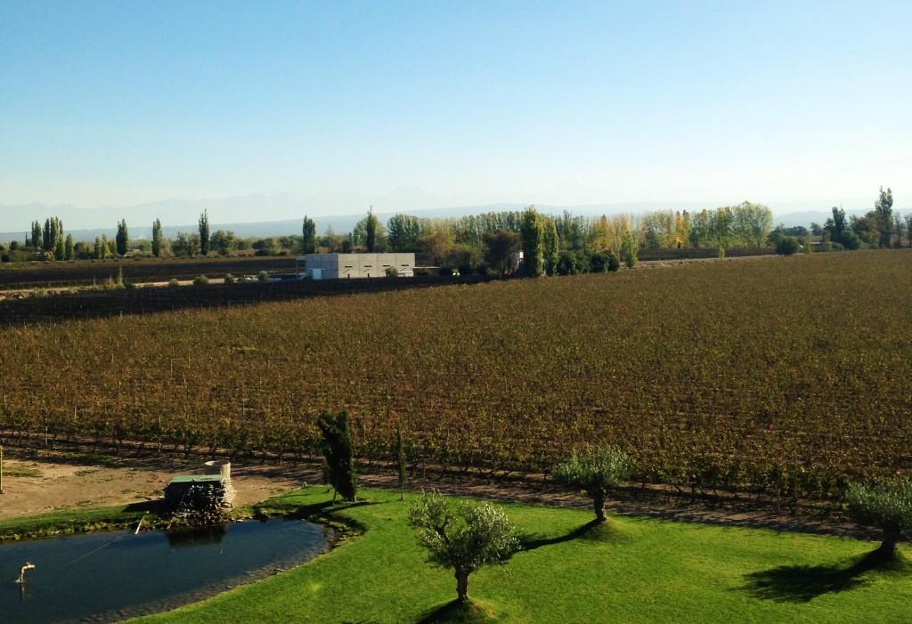Vinhedos compõem a paisagem estonteante dos 70 hectares da vinícola, com a Cordilheira no horizonte