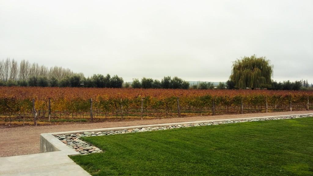 Vista de parte dos vinhedos da Cobos, em Luján de Cuyo: produção anual da vinícola é de 1 milhão de litros