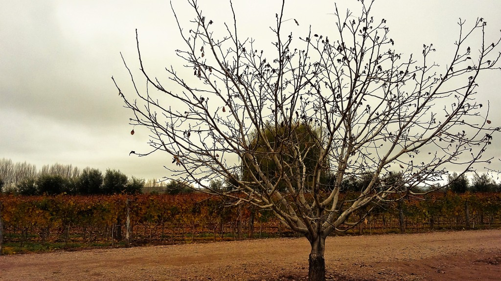 Paisagem que encanta: a vista que se tem de parte dos vinhedos da Viña Cobos na região de Perdriel, Juján de Cuyo, Mendoza