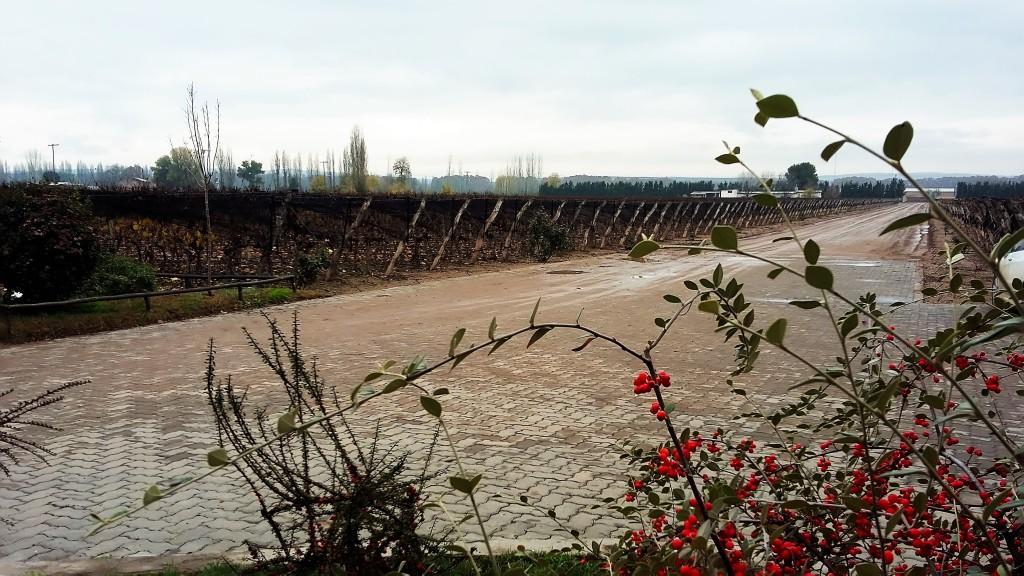 Parte dos vinhedos da bodega, onde são plantadas variedades como malbec, cabernet sauvignon, merlot e torrontés, entre outras