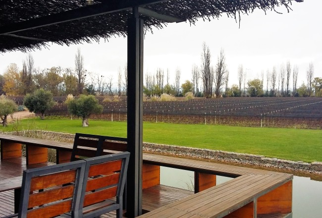 Da varanda do restaurante é possível ver os muitos hectares de vinhedos