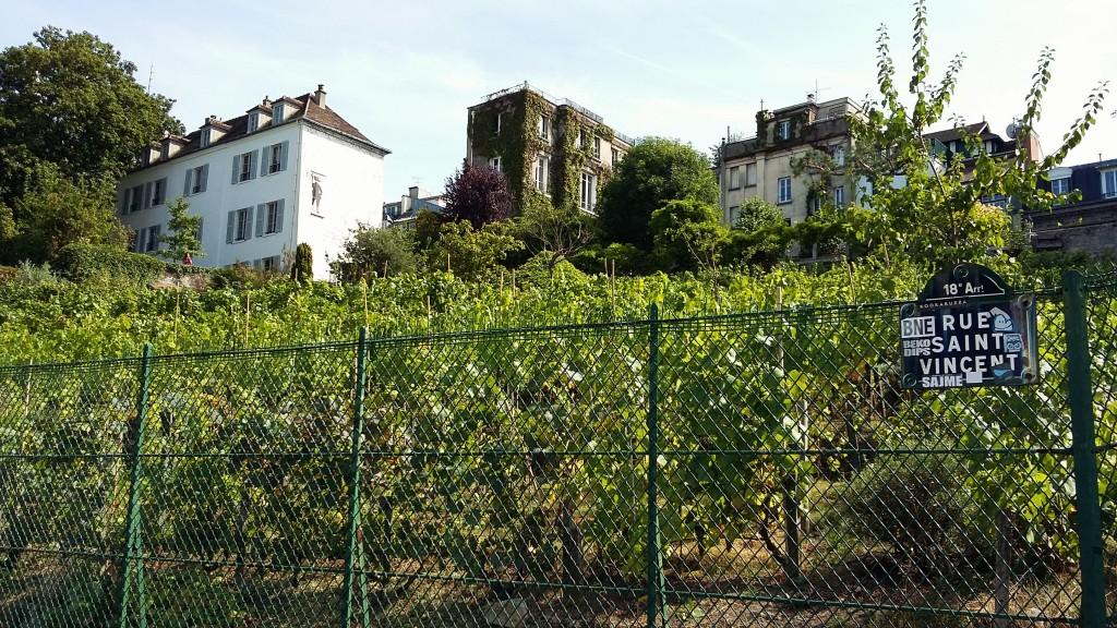 Entre os prédios de Montmartre, está o vinhedo, que existe desde o ano 900