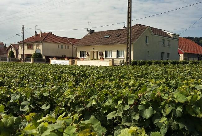 Bebendo e aprendendo um pouco mais sobre a vida dos pequenos viticultores franceses