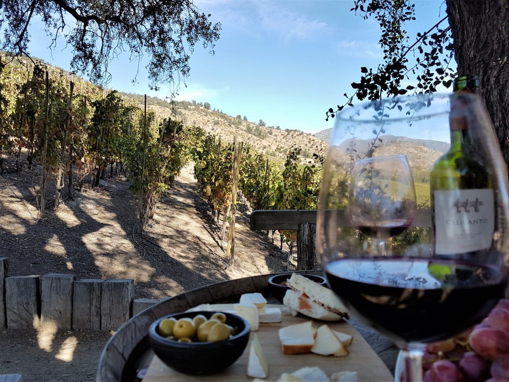 Piquenique regado a vinho num mirante no meio dos vinhedos no Valle del Maipo