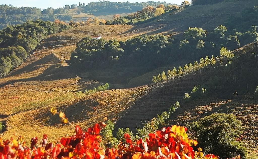 Vista geral do Vale dos Vinhedos e as cores do outono (foto: acervo Aprovale)