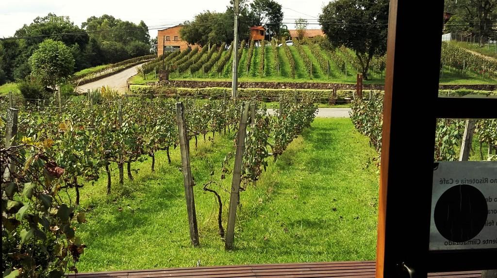 Os parreirais, que circundam a propriedade, vistos de dentro do restaurante da vinícola Vallontano