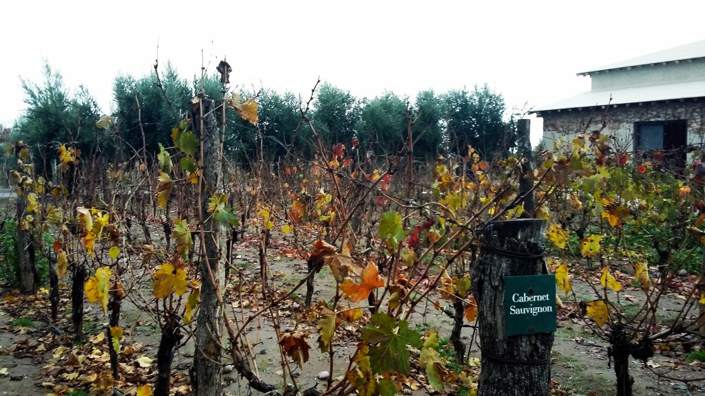 Vinhedo de cabernet sauvignon é parte dos 50 hectares de plantações que a vinícola tem só na sede, em Luján de Cuyo