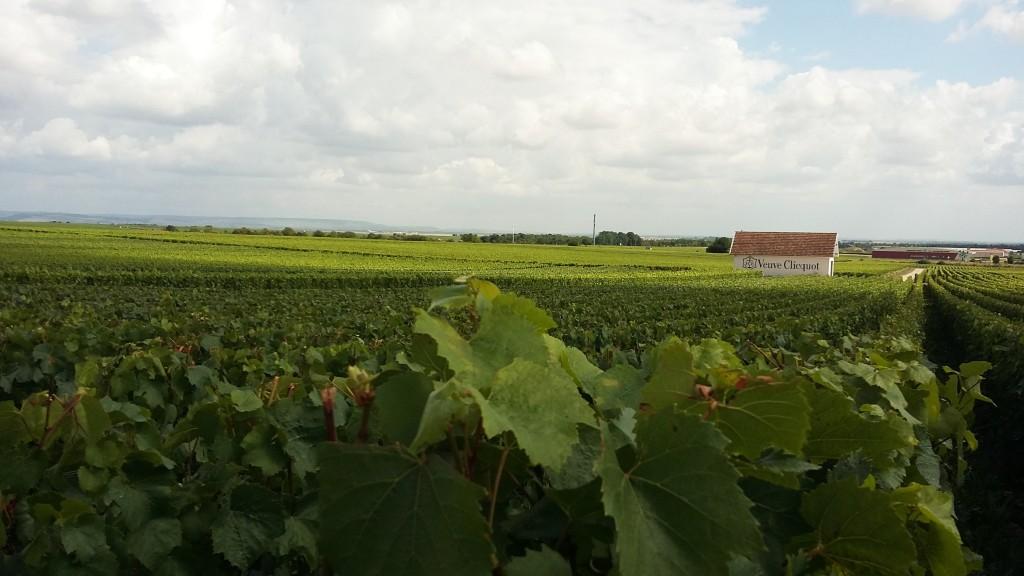Grandes produtores têm vinhedos em cidades 'grands crus' para garantir as uvas que vão gerar os seus champanhes tops