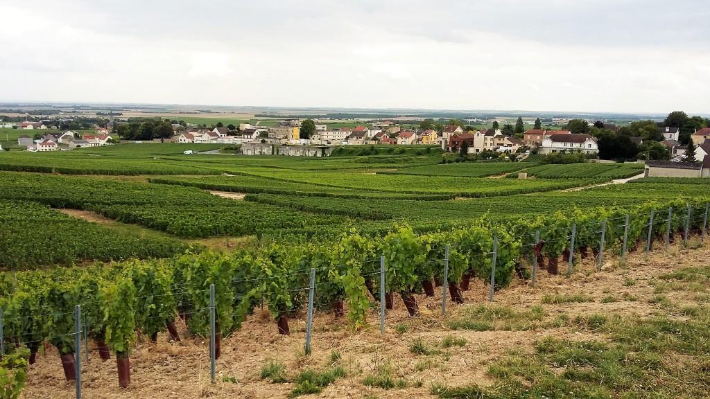 Vinhedos de chardonnay a perder de vista emolduram a pequena vila de Avize, uma das mais bonitas da 'Côte de Blancs'