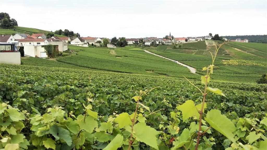 Vinhedos de chardonnay fotografados da beira da estrada e, ao fundo, a cidade de Cramant, na Côte des Blancs, Champanhe